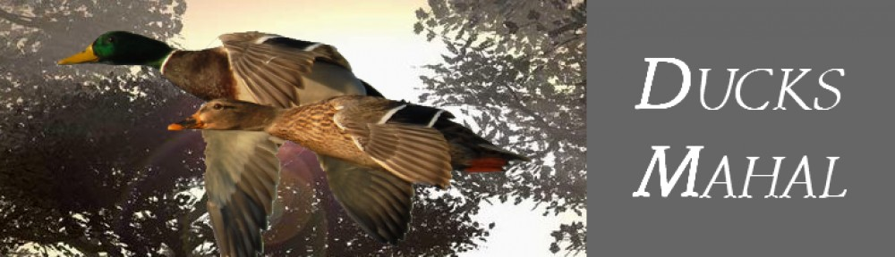 Ducks Mahal